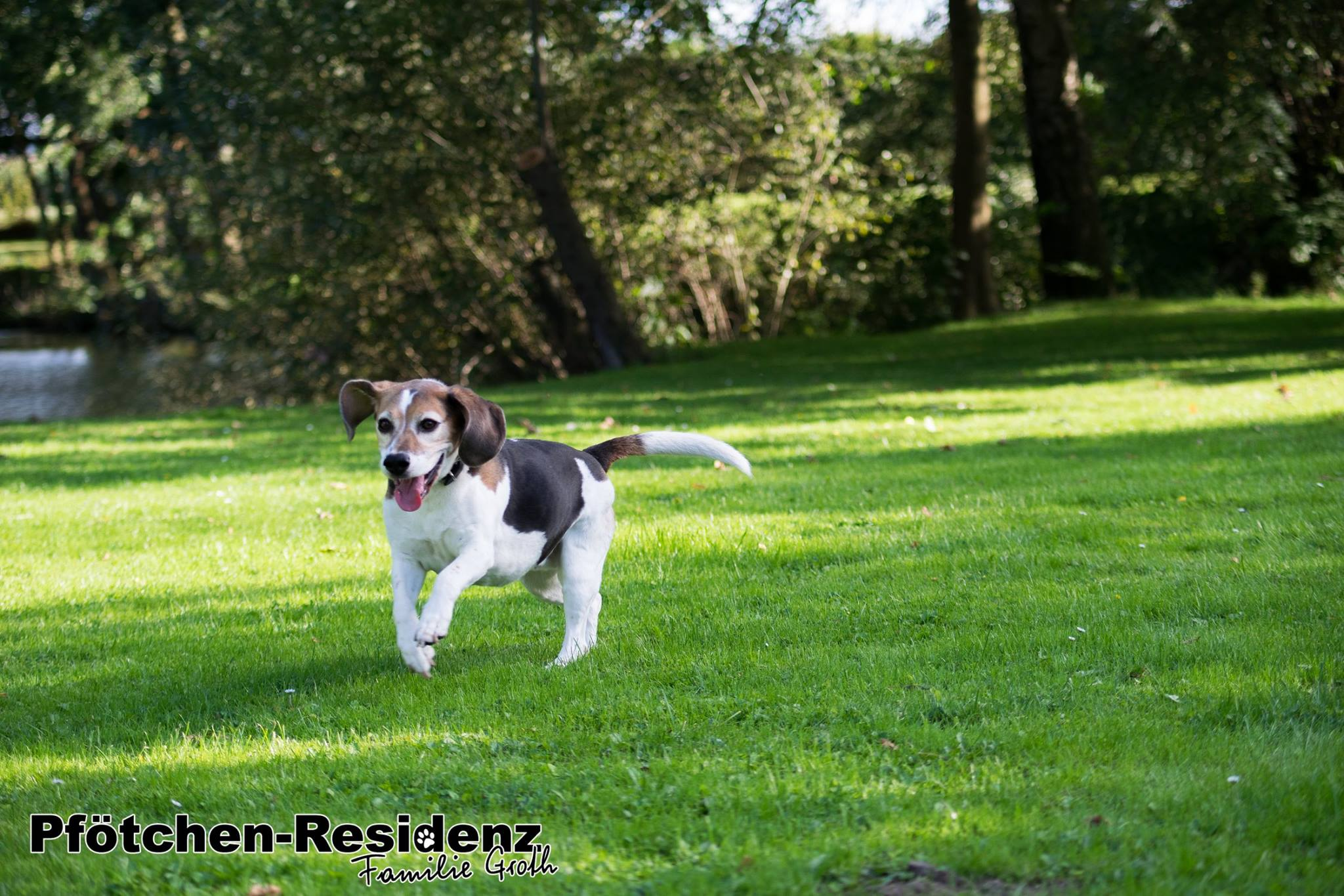 hundepension-hannover-13.jpg