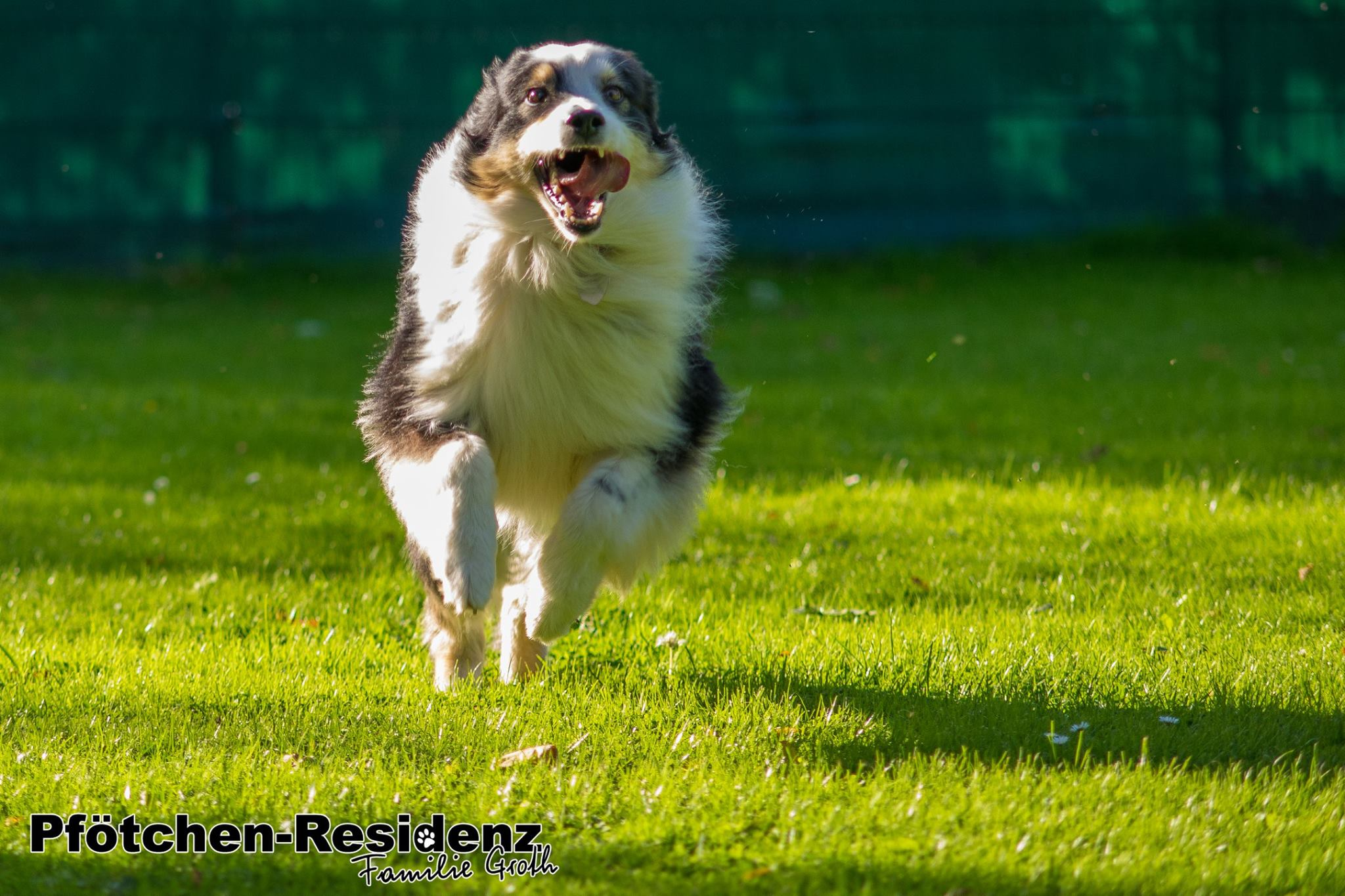 hundepension-hannover-14.jpg