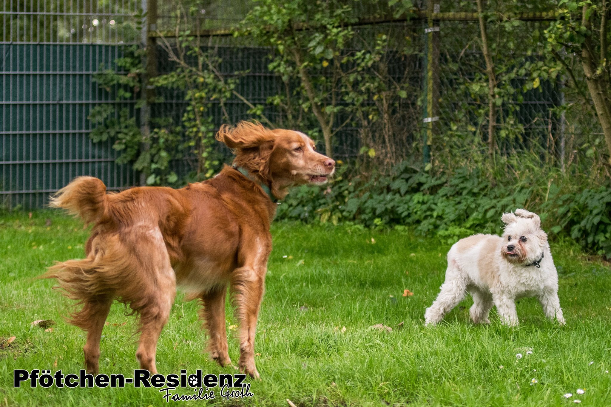 hundepension-hannover-15.jpg