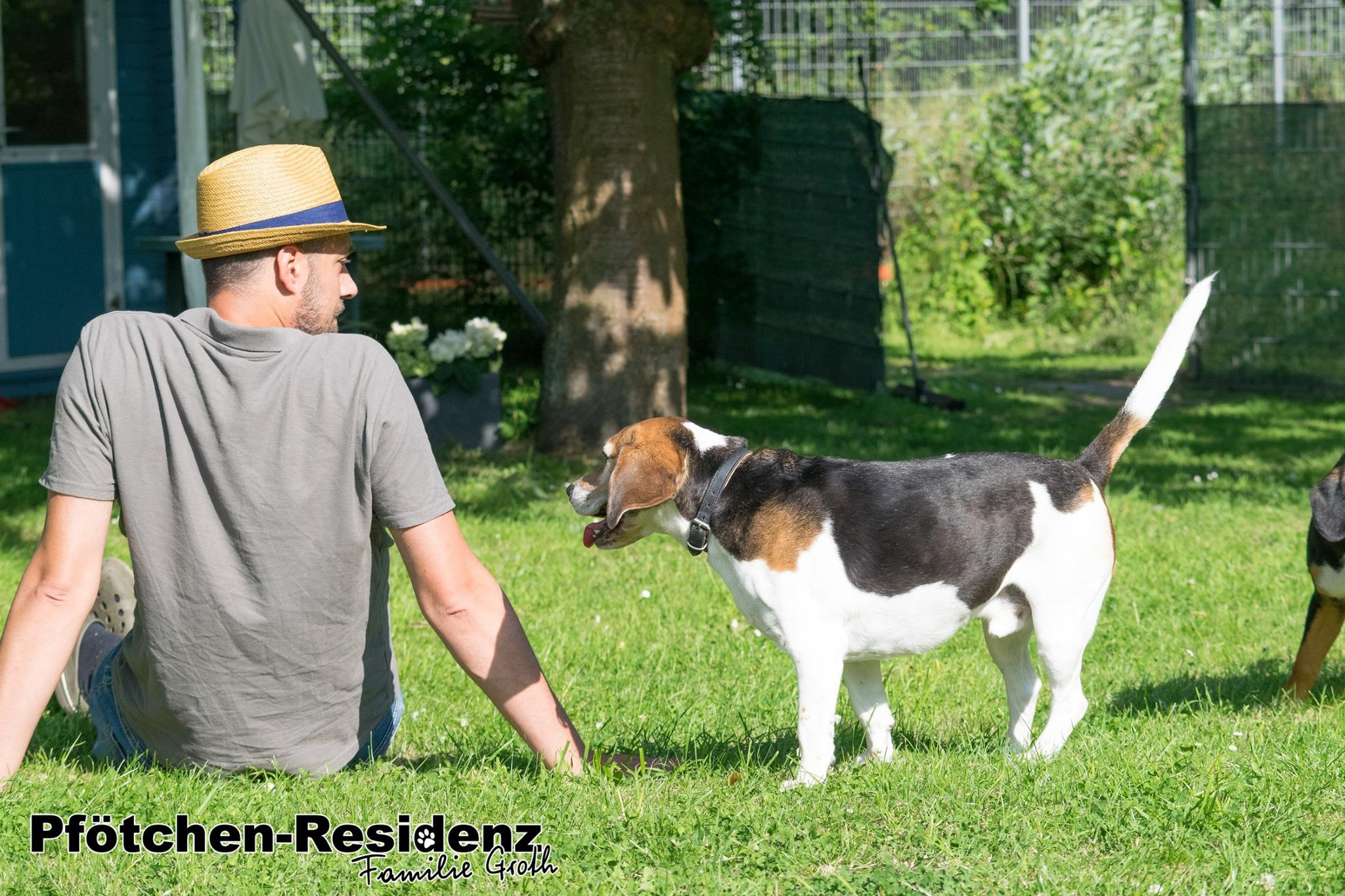 hundepension-hannover-18.jpg