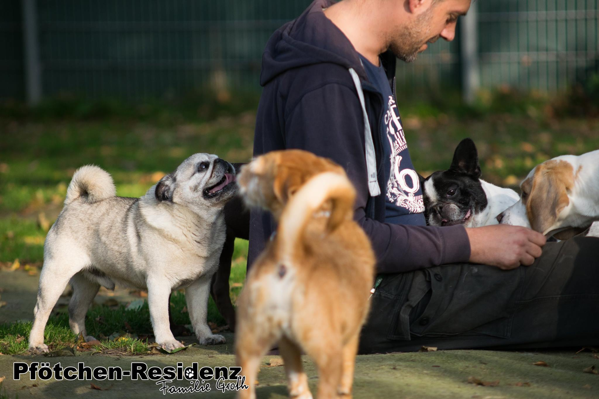 hundepension-hannover-7.jpg